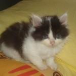 Lilou 3