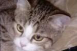 CATSY