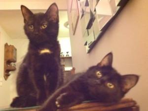 Paprika et Phoebe