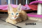 SHIMBA