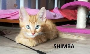 shimba1