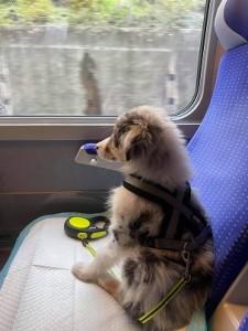 riley train 2A